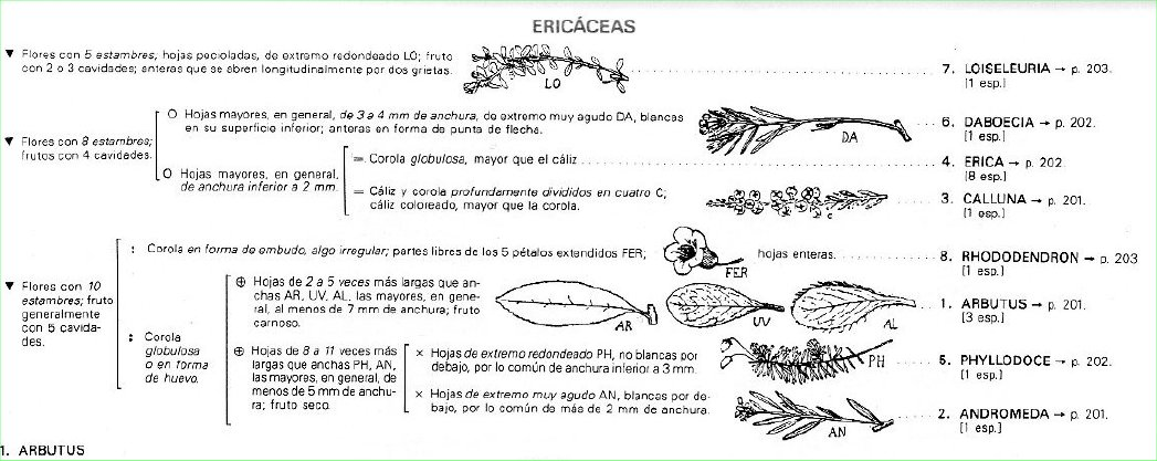 Lamazares_Clasificación_BONNIER_Ericáceas